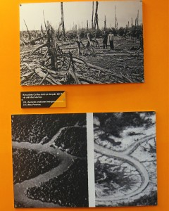 Comparative before & after Agent Orange