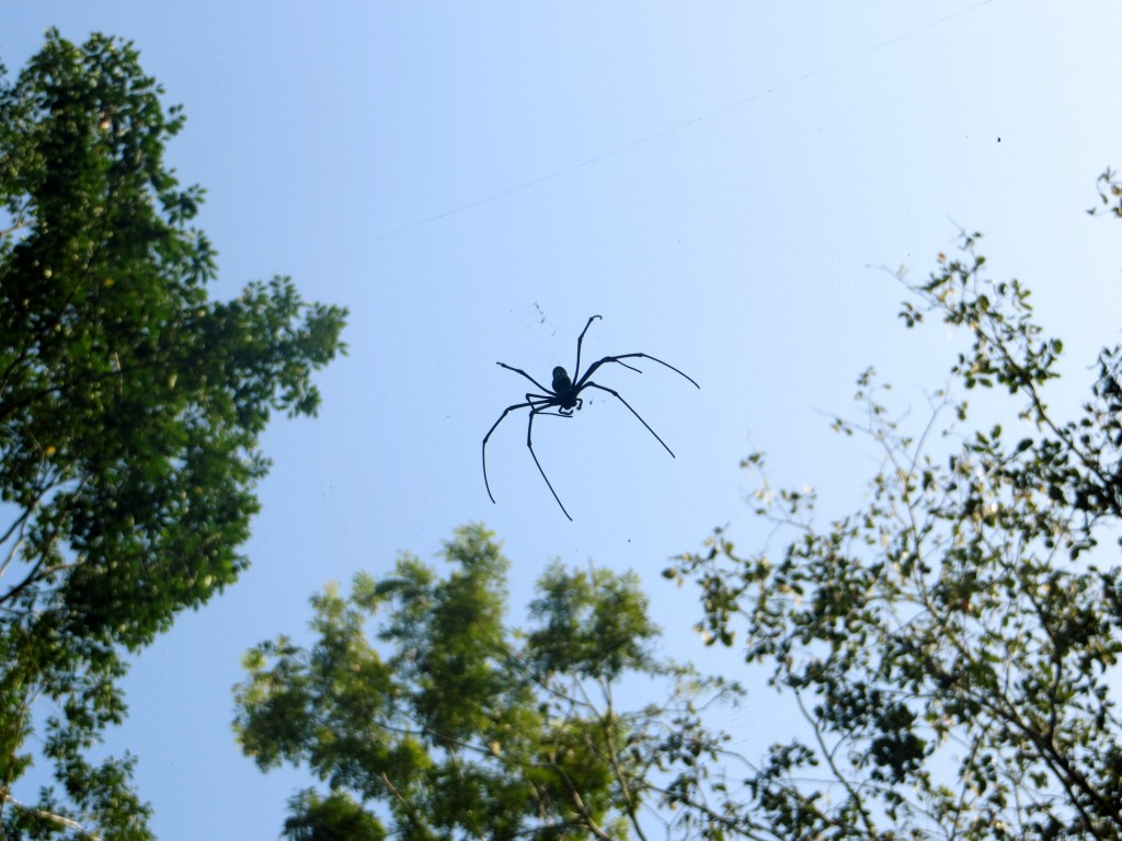Spider we saw on the hike.