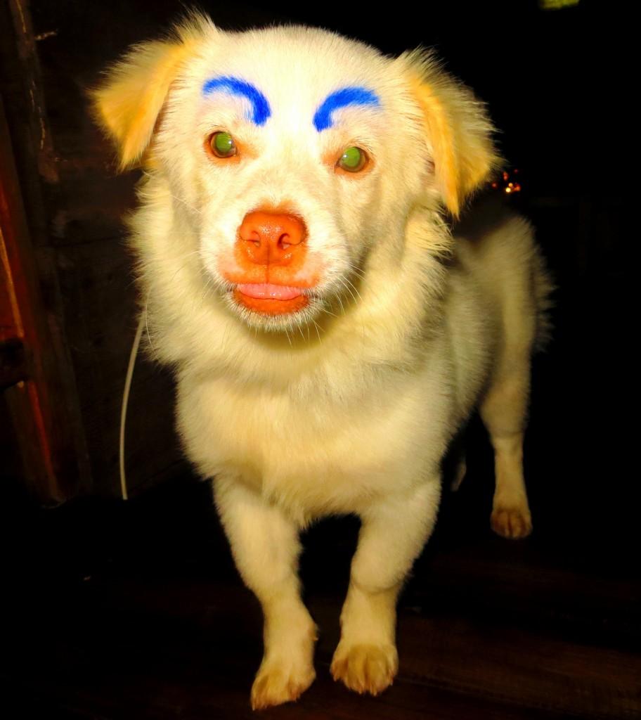 Puppy hahahaha